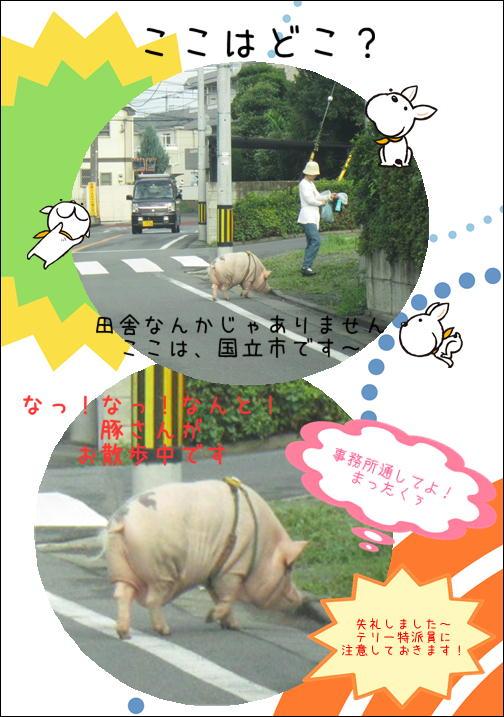 ブタさんのお散歩.JPG