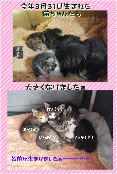恭ちゃんの猫①.JPG