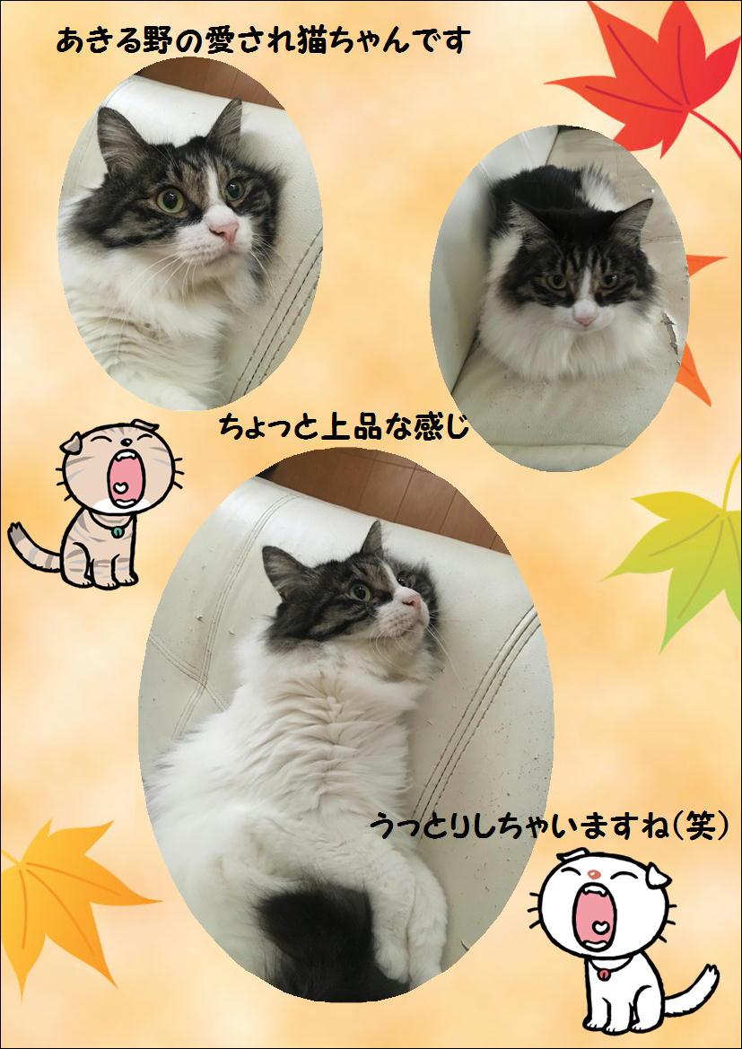 恭ちゃん猫ちゃん テリヤキブログ